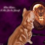 Qu'est-ce que «l'effet miroir» ?