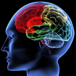 cerveau zones 300x300 Les croyances limitantes (Partie 2)
