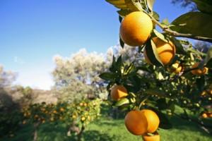 arbre fruitier 300x200 Tendre vers léquilibre